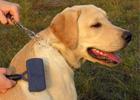 Caring Pets Skin and Coat